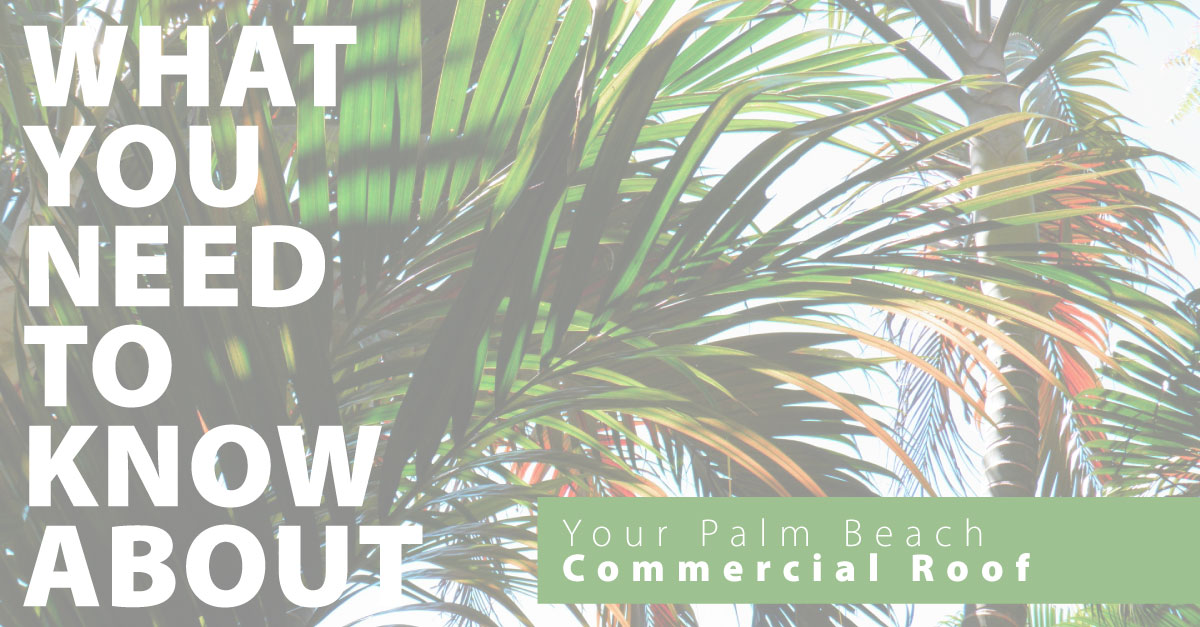What You Need to Know about Your Palm Beach Commercial Roof